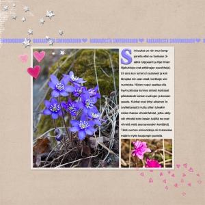 Sinivuokot2014_12x12 copy